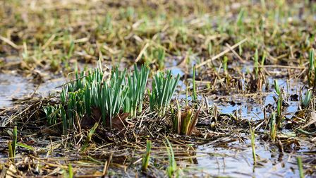 Flowers emerging from the water (photo by Angela Sharpe)