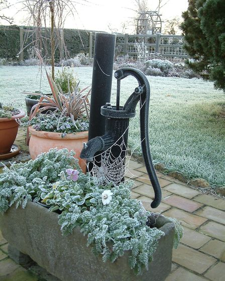 The garden is tranquil even in winter