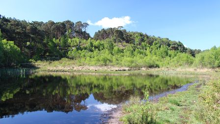 The triangular pond in Dunyeat Hill Nature Reserve
