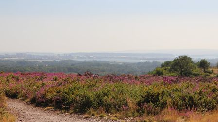 Hazy summer day views to Poole Harbour from Upton Heath