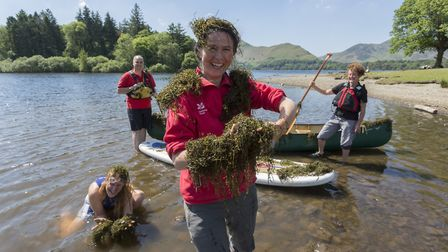 National Trust team clearing pigmyweed from Derwentwater (Picture: Stuart Holmes)