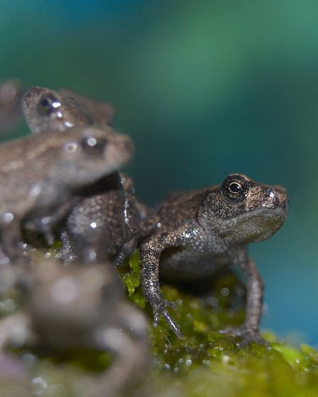 Tiny toads can be seen wandering across paths in summer by Alan Price