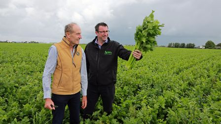 Owner, Len Wright, and Director, Ian Torley, inspecting their latest crop of celery for Len Wright S
