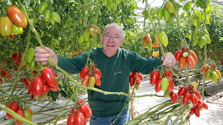 Commercial tomato grower, Brian Ascroft