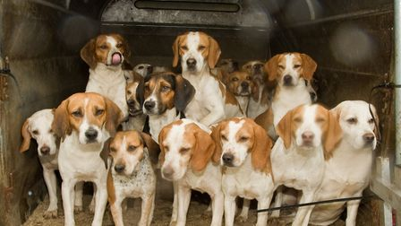 The Bleasdale Beagles ready for action