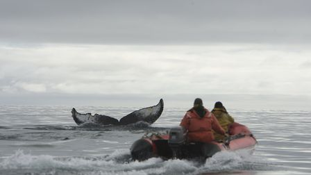 Researchers from the Russian Cetacean Habitat Project, directed by Erich Hoyt, photograph a humpback