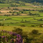 Patchwork fields viewed from Crooks Peak, Somerset Levels (c) Mike Charles / Shutterstock