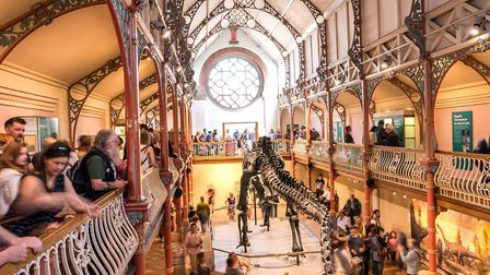 Dippy was seen by over 153,000 visitors during his residency at Dorset County Museum