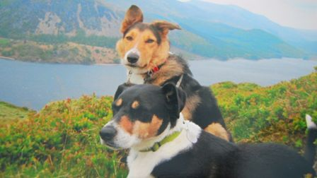 Two pals on the fells
