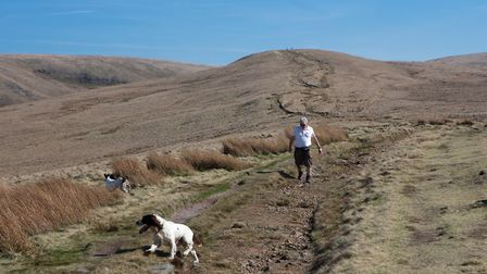 A do walker on the path up to Apronfull Hill