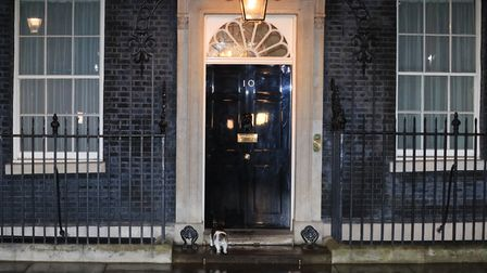 Larry the cat in Downing Street outside 10 Downing Street, London. Photograph: Aaron Chown/PA.