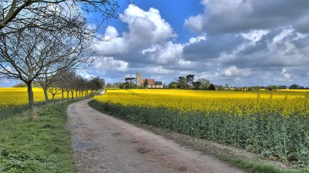 The countryside throughout east anglia is a wash of yellow at the moment as the rapeseed plants ripe