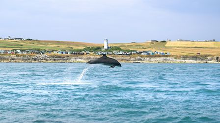 A dream shot of a dolphin jumping off Portland Bill in July