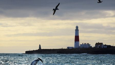 Dolphons riding the race at Portland Bill in March