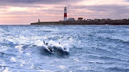 Dolphins riding the race of Portland Bill in March