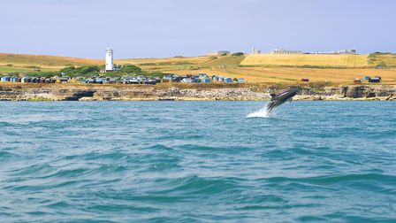 Dolphin encounters in July off the Jurassic Coast