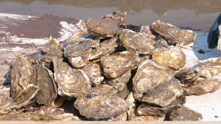 Porlock Bay oysters are the finest Pacific oysters (c) Maureen Harvey