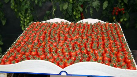 'Devine' tomatoes laid out as a book on the British Tomato Growers' Association stand