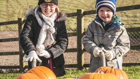 Pick your pumpkin and take it back to the Farm to carve (c) Andrew Woodhouse