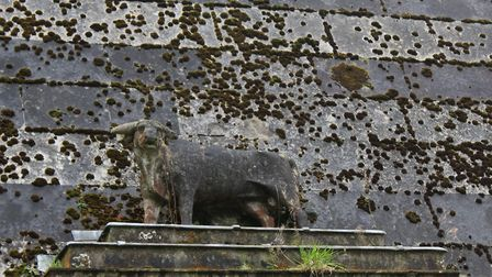 The stone bull, emblem of the Hobart family (photo: Peter James)