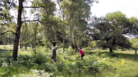 Epping Forest's volunteers