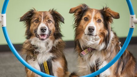 Dogs enjoying enrichment at The Dogs Trust at Snetterton