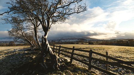 Twisted hawthorne trees lead to one of Pendle Hill's most dramatic slopes; the north side as seen ne