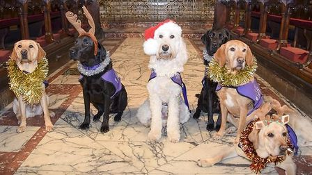 Assistance dogs get in the festive spirit