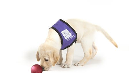 Around 20,000 is needed to support a dog during its 12 year working career