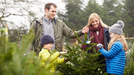 Top Places for Real Christmas Trees