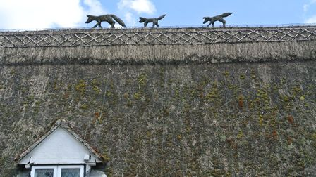 Foxes on top of the thatch at Stoke by Clare