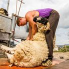 Australian shearer Shane Long is one of the team put together by Ross