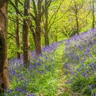 Spring in a beautiful bluebells woods in Cornwall. Photo credit: Ian Wool, Getty Images/iStockphoto