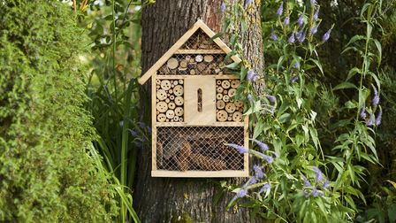 A bee hotel ready for visitors. #GetDorsetBuzzing. Getty Images/iStockphoto