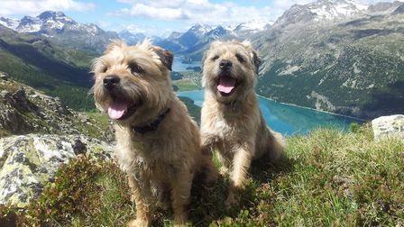 Debbie and Nigel shared a love of border terriers by Nigel Hunter