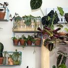 Shelves full of plants vie for space with the cats