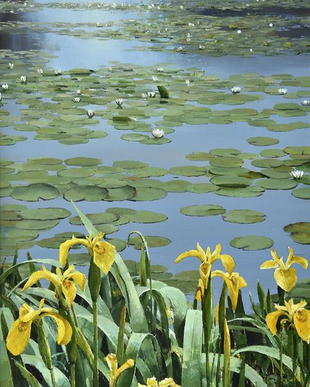 Yellow flags and water lillies by Alan Thompson