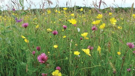 The flowery south meadow at the moss (Picture: Reuben Neville)