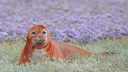 Seal at the River Roach (c) Andrew Armstrong