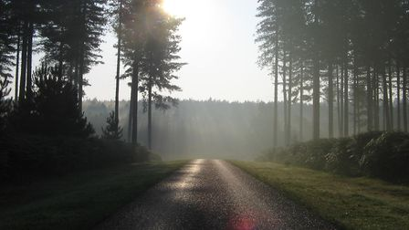 The forest, though man-made, has a beauty to it (photo: Nobne)