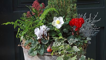 The completed festive planter