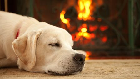 What could be better than cosying up by the fire with a pint in hand and your pooch at your feet thi