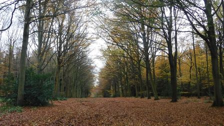 Felbrigg is a lovely spot for a winter stroll (photo: Peter James)