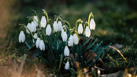 7 magical spots to see Snowdrops