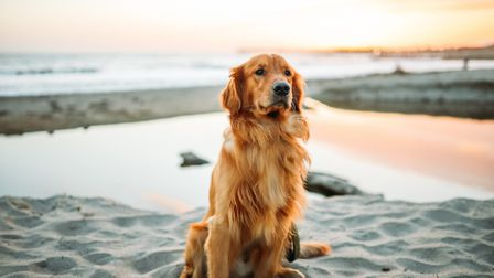 Big changes to dog bans on Cornwall's beaches confirmed
