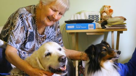 Abbee and another PAT dog, Sheltie Gem, making friends (photo: Serena Shores)