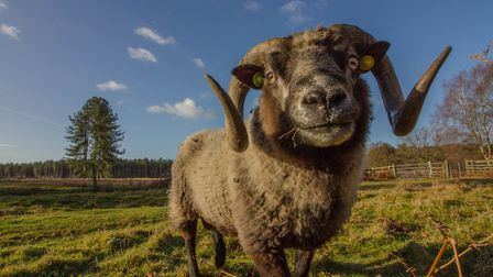 A friendly local at Wretham Nature Reserve (photo: Bob Chalmers)