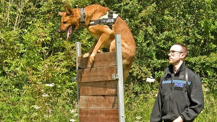 PC Matt Carruthers demonstrates initial obstacle training with Harv, a Malinois/Shepherd Cross
