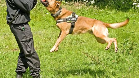 Dogs are trained to target the right arm as this is most often the one which could be holding a weap