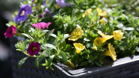 Plant some native flowers and help save the bees!